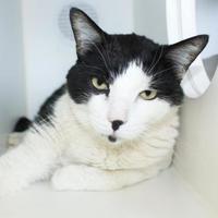 Adopt A Pet :: Abbott - Grass Valley, CA