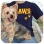 Photo 3 - Yorkie, Yorkshire Terrier Dog for adoption in Baton Rouge, Louisiana - Sugar