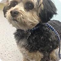 Adopt A Pet :: Sundance - Orange, CA