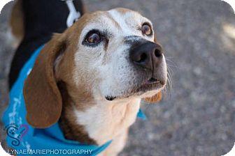 Beagle Mix Dog for adoption in Grand Rapids, Michigan - Odie