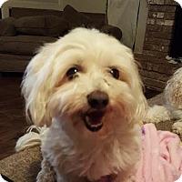 Adopt A Pet :: Rusty - West Warwick, RI