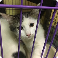 Adopt A Pet :: Rolly - Richboro, PA