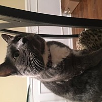 Adopt A Pet :: Addison - NC - Liberty, NC