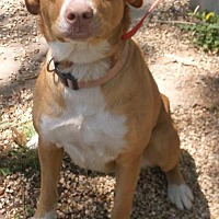 Adopt A Pet :: Biscuit - Birch Tree, MO