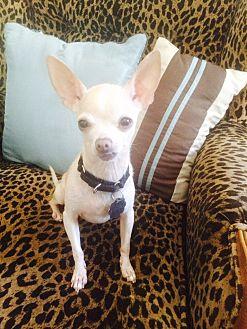 Chihuahua Mix Dog for adoption in Santa Monica, California - Mae