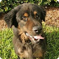 Adopt A Pet :: MATT - West Palm Beach, FL
