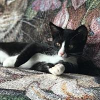 Adopt A Pet :: Scout - Oxnard, CA