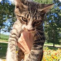 Adopt A Pet :: Toby - Smithtown, NY