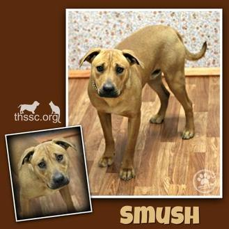Mixed Breed (Medium) Mix Dog for adoption in Sullivan, Indiana - Smush