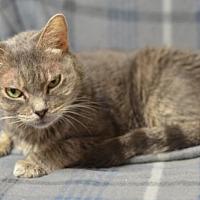 Adopt A Pet :: Angelique171650 - Atlanta, GA