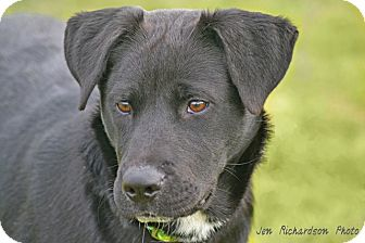 Labrador Retriever Mix Dog for adoption in kennebunkport, Maine - Teagan - PENDING, in Maine