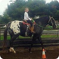 Adopt A Pet :: Big Jack - Aumsville, OR