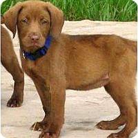 Adopt A Pet :: Barbie - Altmonte Springs, FL