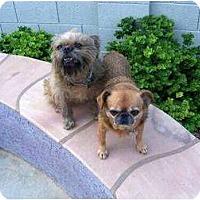 Adopt A Pet :: NESTLE & BUGSY in Tempe, AZ - Mesa, AZ