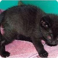 Adopt A Pet :: Ashton - Secaucus, NJ