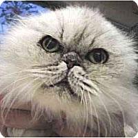 Adopt A Pet :: Mark - Davis, CA