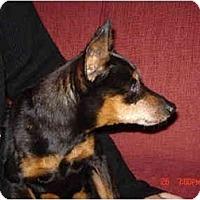 Adopt A Pet :: Jack Needs Help - Nashville, TN
