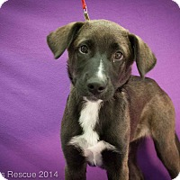 Adopt A Pet :: Marty - Broomfield, CO