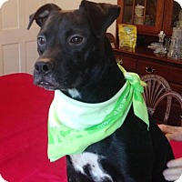 Adopt A Pet :: Joy - Midway, KY