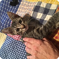 Adopt A Pet :: Clark - Weatherford, TX