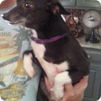 Adopt A Pet :: Ruby - Dothan, AL