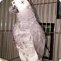 Adopt A Pet :: Sammy - Lenexa, KS