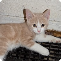 Adopt A Pet :: Owen - South Bend, IN