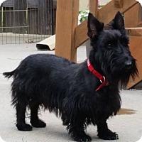 Adopt A Pet :: Lillith-pending adoption - Omaha, NE