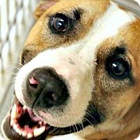 Adopt A Pet :: Hayden - McKinney, TX