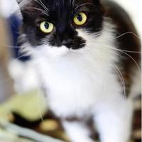 Adopt A Pet :: Houdini - Indianapolis, IN