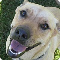 Adopt A Pet :: Izzy - Eastpointe, MI