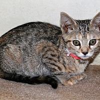 Adopt A Pet :: Effie - Attalla, AL