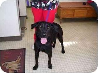 Labrador Retriever Dog for adoption in San Diego, California - CHISPA