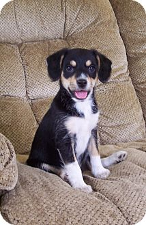Terrier (Unknown Type, Small) Mix Puppy for adoption in Milford, New Jersey - Tasha