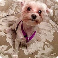 Adopt A Pet :: Holly Berry - Bartow, FL