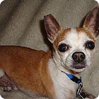 Adopt A Pet :: Eli - Ocala, FL