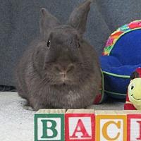 Adopt A Pet :: Baci - Newport, DE