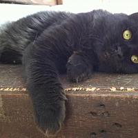 Adopt A Pet :: Lars - Sherman Oaks, CA