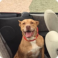 Adopt A Pet :: Rigby - Cedar City, UT