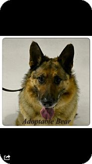 German Shepherd Dog Mix Dog for adoption in Mt. Clemens, Michigan - Bear
