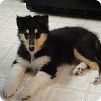 Adopt A Pet :: Cole - Powell, OH