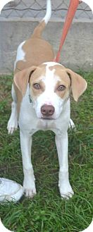 Labrador Retriever Mix Dog for adoption in Beaumont, Texas - Gypsy