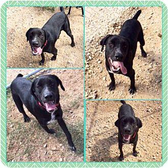 Labrador Retriever Mix Dog for adoption in Garber, Oklahoma - Ace
