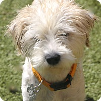Adopt A Pet :: Binny and Becky - Woonsocket, RI