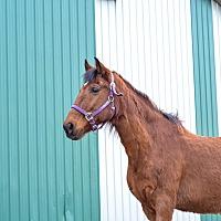 Adopt A Pet :: JD - Seville, OH