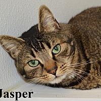 Adopt A Pet :: Jasper - Fryeburg, ME