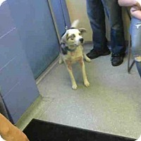 Adopt A Pet :: FORD - Louisville, KY