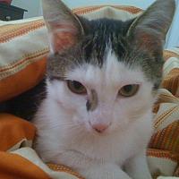 Adopt A Pet :: Summer - Monroe, NC