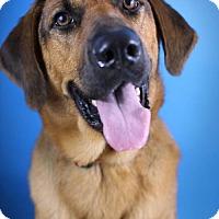 Adopt A Pet :: Kaiser - Tallahassee, FL