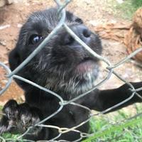 Adopt A Pet :: Otis - Fairfax Station, VA